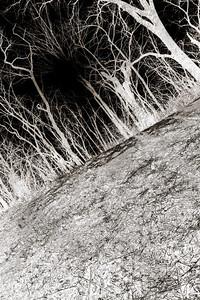 015-winter_trees-wdsm-23nov17-08x12-218-500-2795