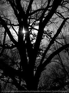015-tree_sunlight-wdsm-18nov12-001-bw-9062