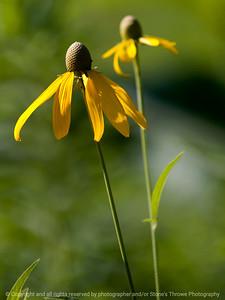 flower-wdsm-07jul15-09x12-001-3740
