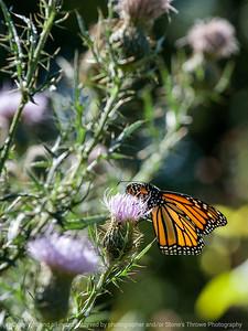 butterfly-wdsm-12sep15-09x12-001-5042