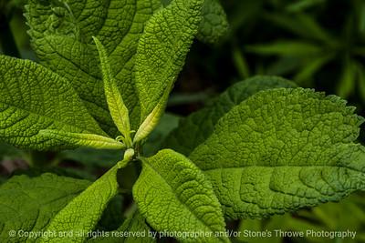 015-botanical-wdsm-16may16-18x12-003-9035