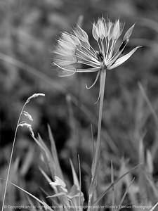 015-botanical-wdsm-16jun12-001-bw-6786