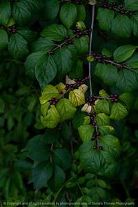 015-leaves-wdsm-03sep21-08x12-008-400-4557