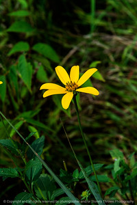 015-flower-wdsm-06sep18-08x12-008-500-7445