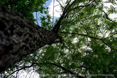 015-tree-wdsm-18may17-18x12-003-9183