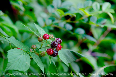 015-blackberry-wdsm-26jun19-09x06-009-500-1326