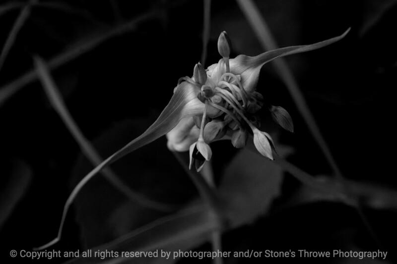 015-botanical-wdsm-07jun16-18x12-003-bw-9863