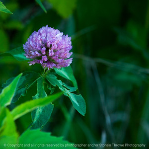 015-clover-wdsm-28may17-09x09-006-3060