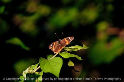 015-butterfly-wdsm-21jun10-5563