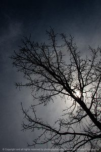 015-tree_silhouette-wdsm-23mar19-06x09-009-500-9525
