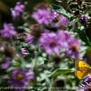 butterfly-wdsm-27sep15-12x09-002-5319