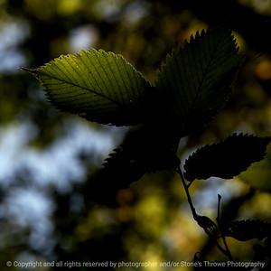 015-leaf-wdsm-08sep17-09x09-006-350-1495