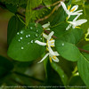 015-water_drops-wdsm-10may14-006-1427