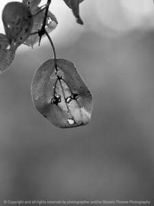 leaf-wdsm-28aug15-09x12-001bw-4660
