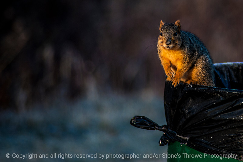 015-squirrel-wdsm-27jan15-18x12-004-1537