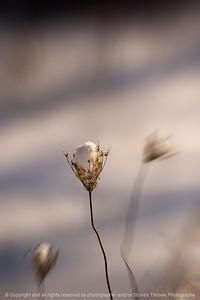 015-botanical_snow-wdsm-10jan09-cvr-1153