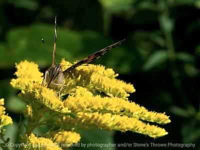 015-butterfly-wdsm-05sep17-12x09-002-1347
