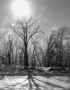 015-winterscape-wdsm-13dec07-c3-bw-1885