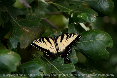015-butterfly-wdsm-03aug17-12x08-007-0495