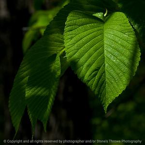 015-leaf-wdsm-08may16-09x09-006-8631