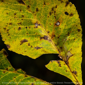 015-leaf_face-wdsm-07oct20-03x03-006-400-8510