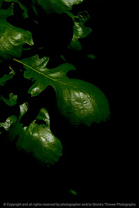 015-leaf-wdsm-25may17-12x18-004-2998