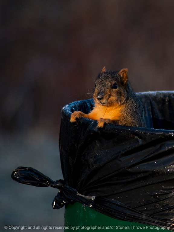 015-squirrel-wdsm-27jan15-09x12-001-1532