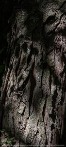 tree_detail-wdsm-05x11-007-4562