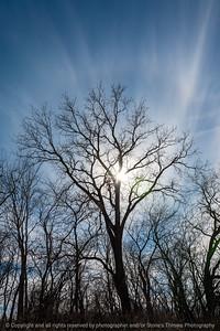 015-silhouette_tree-wdsm-27feb21-08x12-008-400-9213