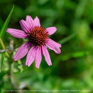 015-flower-wdsm-03aug18-09x09-006-350-6337