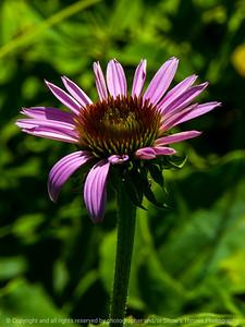 015-flower-wdsm-23jun16-09x12-001-9984