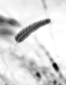 015-botanical_winter-wdsm-09feb09-1257