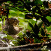 015-squirrel-wdsm-28jul14-003-1769