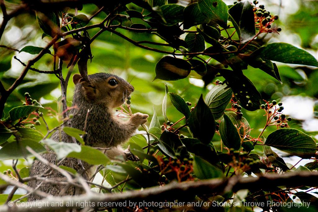 015-squirrel-wdsm-28jul14-003-1769
