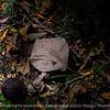 015-leaf-wdsm-08sep17-12x08-007-1521