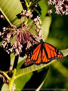 015-butterfly-wdsm-28jun10-cvr-5770
