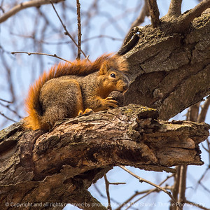 015-squirrel-wdsm-01apr19-03x03-006-500-9726