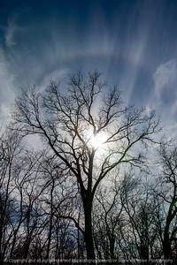 015-silhouette_tree-wdsm-27feb21-08x12-008-400-9154