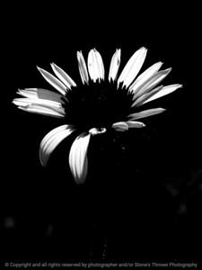 015-flower-wdsm-23jun16-09x12-201-bw-9984
