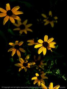 015-flower-wdsm-03aug18-09x12-001-350-6340