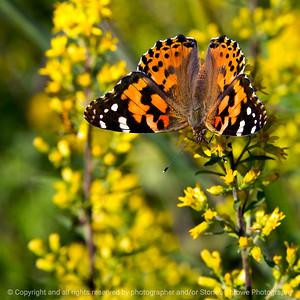 015-butterfly-wdsm-05sep17-09x09-006-1385