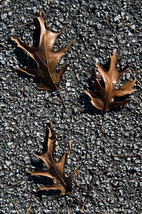 015-leaves_autumn-wdsm-28oct17-08x12-207-2533