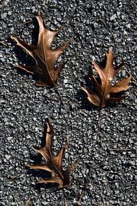015-leaves_autumn-wdsm-28oct17-08x12-207-2533