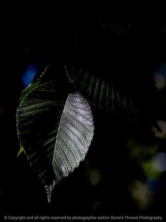 leaf-wdsm-23aug15-09x12-201-4489