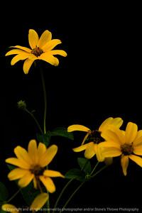 015-flower-wdsm-01aug16-12x18-004-5049