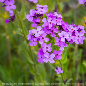 015-flower-wdsm-15may21-09x09-006-400-1041