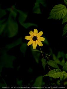 015-flower-wdsm-03au18-09x12-001-350-6361