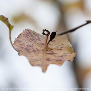 015-leaf-wdsm-25oct16-12x12-006-1943