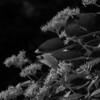 015-leaf-wdsm-07jun16-09x12-001-bw-9870
