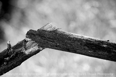tree_branch-wdsm-20feb16-18x12-003-bw-6450